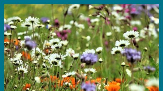 Regio-Prämie: Blühwiesen & Bäume für mehr Klimaschutz in der Region