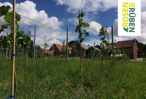 Ernteaktion & offene Gartenpforte auf HazelsFarm